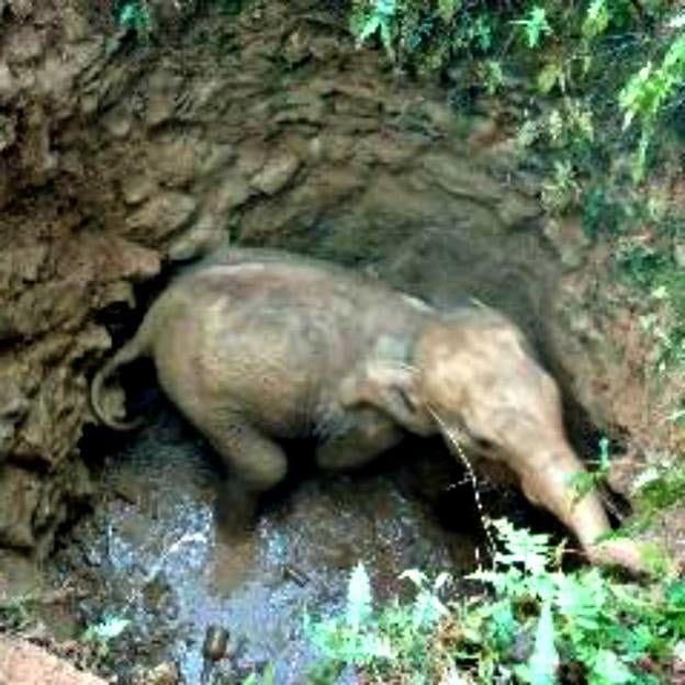 Bebê Elefante Recebeu Socorro de Anjos Inesperados