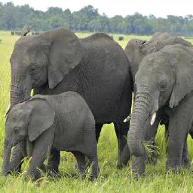 Uma procissão de elefantes no extremo sul da Índia