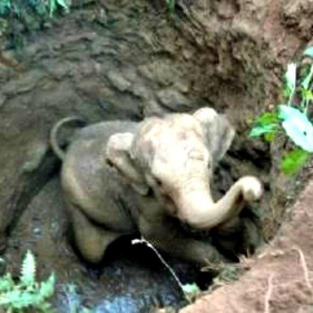 As lutas do bebê elefante