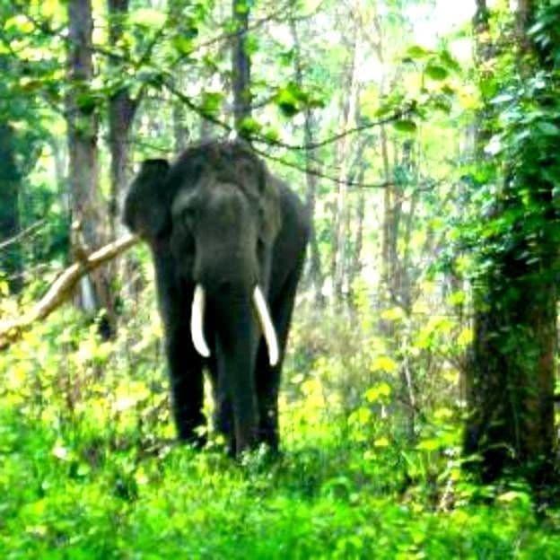 Os elefantes selvagens pareciam saber que havia ajuda por perto