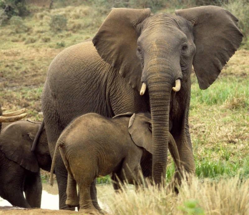 Os elefantes são criaturas muito apreciadas na Índia